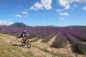 Mountainbikerin fährt in der Provence am Lavendelfeld entlang